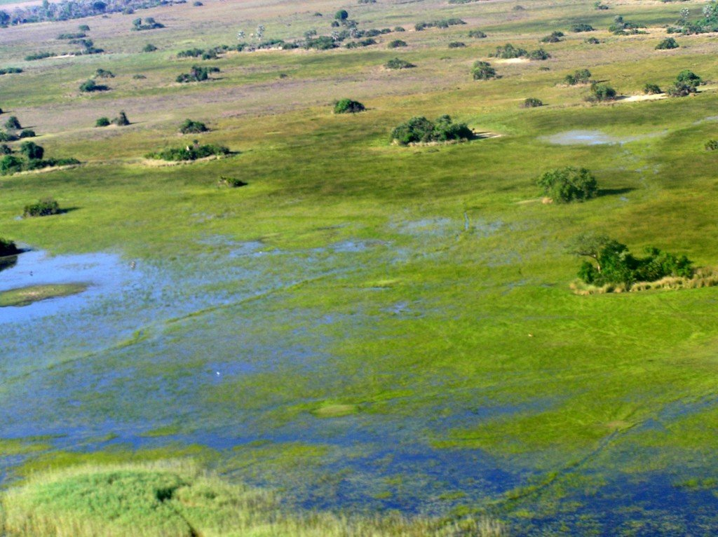 Take An Okavango Delta Scenic Flight And See Botswana From
